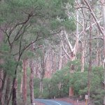 Karri Forest 2
