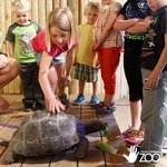 Galapagos Tortoise at Lincoln Children's Zoo's Animal Encounter Stage