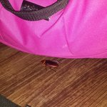 The roach we killed in our room. Disgusting.