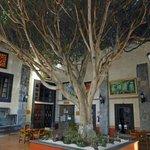 Baum im Innenhof