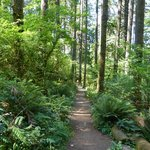 Lush forest, Great trails