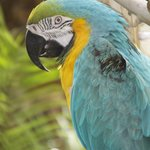 A parrot in the grounds