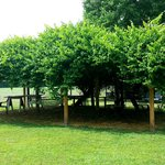 Romantic old grape arbor is lit at night with twinkling lights & two hammocks