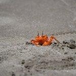 Ghost crabs > cartoons