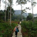 Walking to accommodation