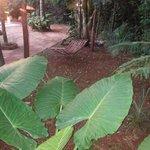 tamaño de las hojas