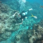 Son exploring the reef