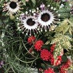 Beautiful, unusual flowers