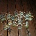The lobsters Paul caught on the reef
