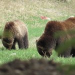 Mum and cub.