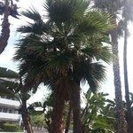 Palm trees ahhh!