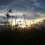 Evening at the grassland beside runway