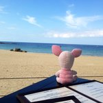Pinky the traveling pig loves her view of the sea