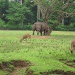 Rhino and dear