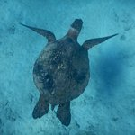 One of the turtles we saw while snorkeling.