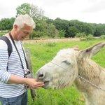 notre ami l'âne