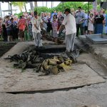 Of true Luau tradition, pulling the pig from the buried coals