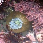 Closed anemone
