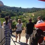 Breathtaking vineyard tour