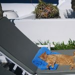 One of the resort cats making itself at home