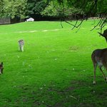 Visitors can mingle freely amongst the deer