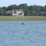 Dolphin we saw