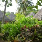 Thatched Cabanas