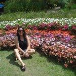 Flores lindas e coloridas.