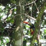 Lovely Toucan