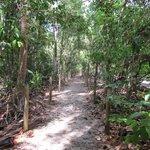 Trail along Playa Espadilla Sur