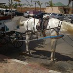 Meknes - horse carriage