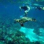 in cerca di tartarughe