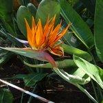 fleur perroquet