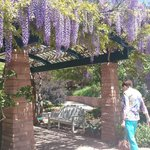 Mom at the wisteria arbor