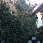 Ivy on the walls