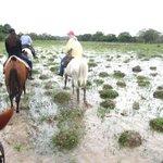 horse riding through the wetlands