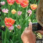 capturing my husband capturing the flowers