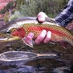 Fishing The Roaring Fork River