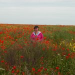 Poppy field beside Longues Battery
