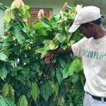 Elroy explains the different types of coffee plants growing at the Belcampo Farm Center.