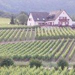 Wonderful vineyard view