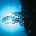 Sunlit Sea fan