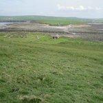 Brough of Birsay looking towards Viking settlement