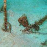 St Lucia Starfish