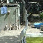 Egret at Suncoast Seabird Sanctuary