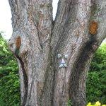 Squirel friendly tree in yard