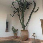 cactus dans le patio