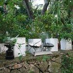 Polyphemus Garten 5
