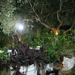 Polyphemus Garten 6