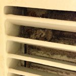 Mmm dust and mold in the bathroom vent